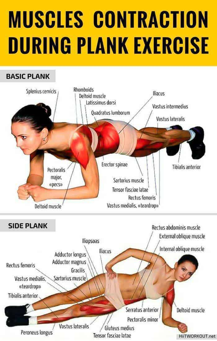 Muscles used | Plank workout benefits